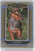 Tier 5 - Darwinius