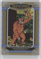 Tier 5 - Dryopithecus