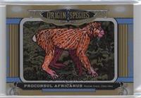 Tier 5 - Proconsul Africanus