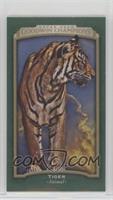 Tiger #/25
