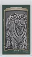 Black & White - Tiger #/25