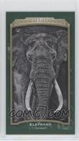 Black & White - Elephant #/25