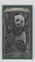 Black & White - Panda #/25
