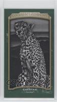 Black & White - Cheetah #/25