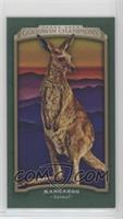 Kangaroo #/25
