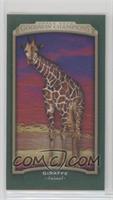 Giraffe #/25