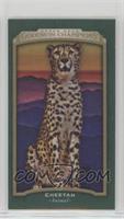 Cheetah #/25
