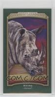 Horizontal - Rhino #/25