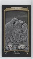 Black & White - Rhino #/17