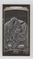 Black & White - Rhino