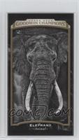 Black & White - Elephant