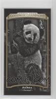 Black & White - Panda