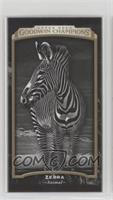 Black & White - Zebra