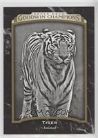 Black & White - Tiger