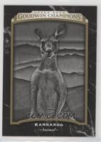 Black & White - Kangaroo