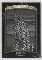Black & White - Cheetah