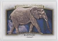 Horizontal - Elephant