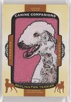 Tier 1 Terrier - Bedlington Terrier