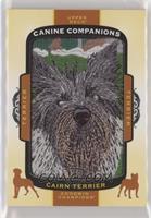Tier 1 Terrier - Cairn Terrier