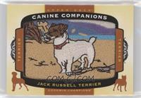 Tier 1 Terrier - Jack Russell Terrier