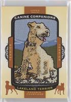 Tier 1 Terrier - Lakeland Terrier