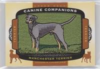 Tier 1 Terrier - Manchester Terrier