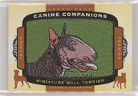 Tier 1 Terrier - Miniature Bull Terrier