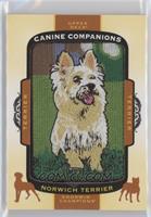 Tier 1 Terrier - Norwich Terrier