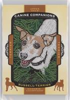 Tier 1 Terrier - Russell Terrier