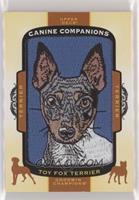 Tier 1 Terrier - Toy Fox Terrier