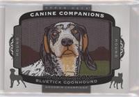 Tier 2 Hound - Bluetick Coonhound