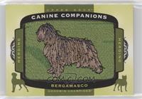 Tier 3 Herding - Bergamasco