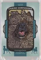 Tier 4 Non-Sporting - Keeshond