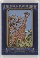 Tier 3 - Northern Giraffe