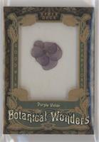Tier 1 - Purple Violas