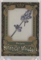 Tier 2 - Blue Salvia
