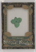 Tier 1 - Green Hydrangea