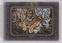 Tier 5 - Tiger