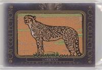 Tier 5 - Cheetah