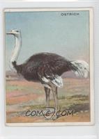 Ostrich [PoortoFair]