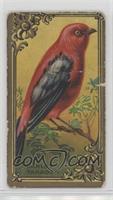 Scarlet Tanager [NonePoortoFair]