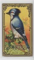 The Blue Jay [NonePoortoFair]