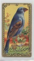 The Blue Grosbeak [NonePoortoFair]