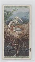 Heron's Nest and Occupants [GoodtoVG‑EX]