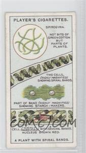 1929 Player's Hidden Beauties - Tobacco [Base] #2 - A Plant with Spiral Bands