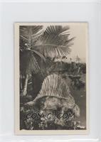 Dimetrodon Gigas [PoortoFair]