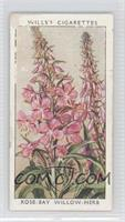 Rose-Bay Willow-Herb