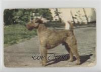 Irish Terrier [PoortoFair]