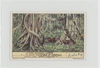 La grande foret de l'Ituri et l'Okapi