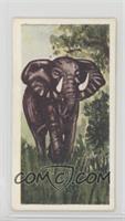 African Elephant [NoneGoodtoVG‑EX]